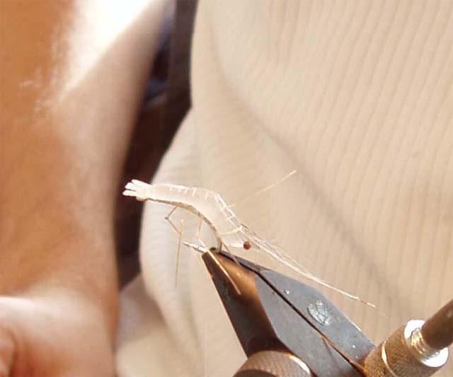 Fluebinding den 26.2.2005