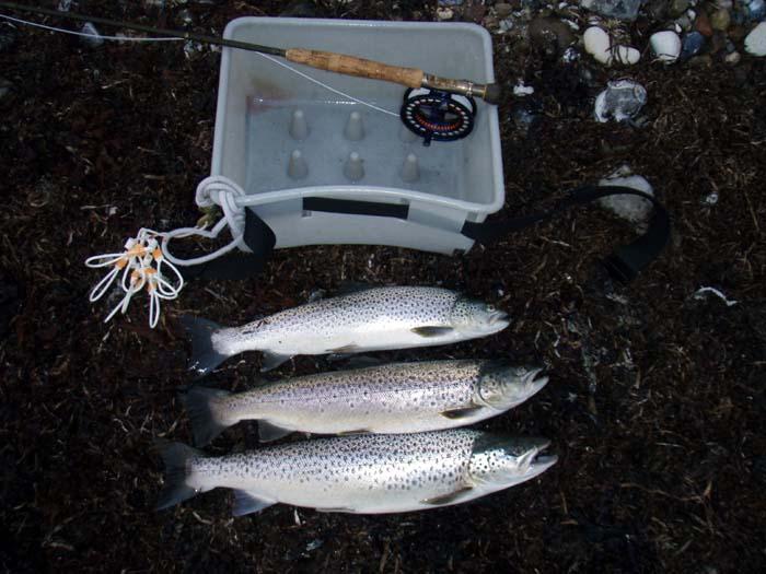 Wedellsborg og Husby Fiskeri 1.9.2009