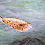 Farvet fisk