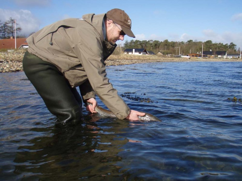 Fiskeri Saltbæk
