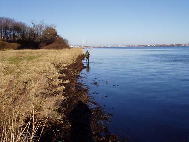 Fiskeri Lyngsodde