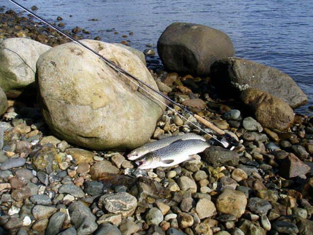 Fiskeri Brejning hoved