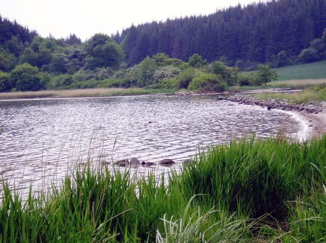 Eltangvig dæmningen