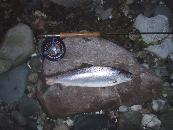 Fiskeri Holtserhage