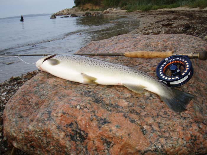 Fiskeri Kanonstillingen